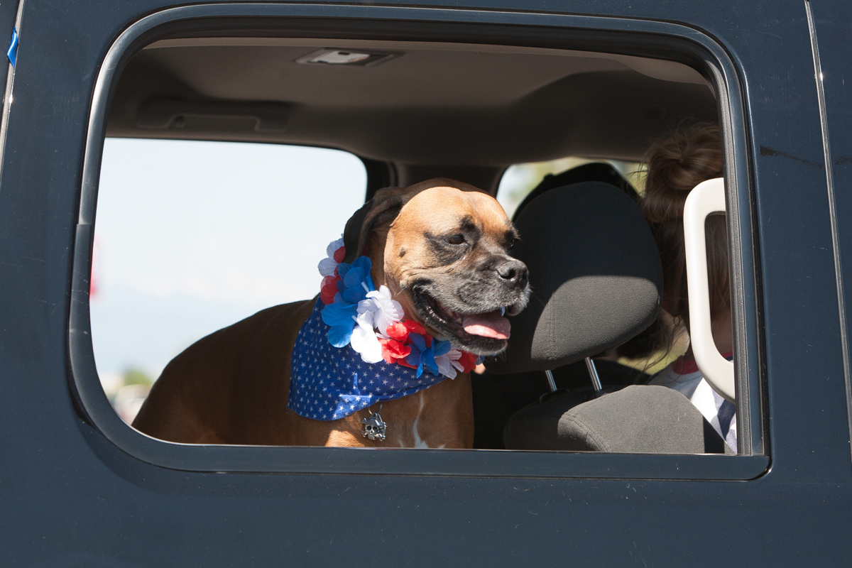 Dog in truck during parade